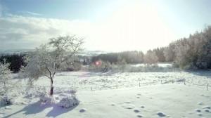 Wolfsbusch
